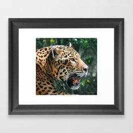 Jaguar in May Framed Art Print