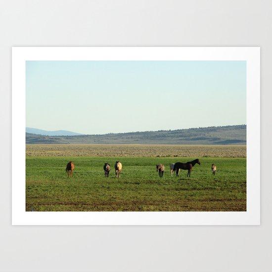 California Mustangs Art Print