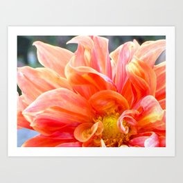Flower Flames Art Print