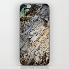 Eaten Wood iPhone & iPod Skin