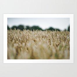 Grainfield, Shallow depth of field - Marrum - Friesland, The Netherlands Art Print