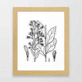Botanical Scientific Illustration Black and White Framed Art Print
