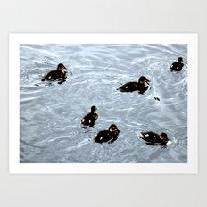Duck 02 Art Print