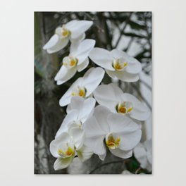 Immaculate Canvas Print