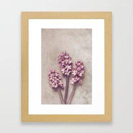 Lovely pink Hyacinths Framed Art Print