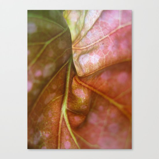 Begonia 976 Canvas Print
