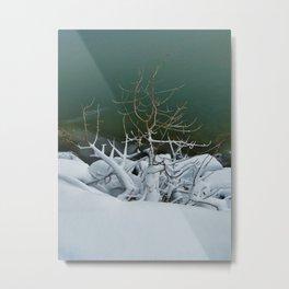 Reaching For Warmth Metal Print