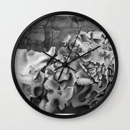 Oxyelea elegans Habitat  Wall Clock