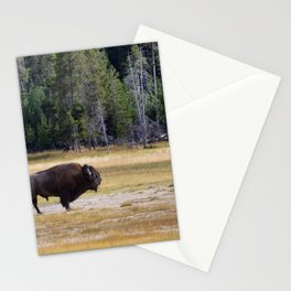 Old North American Bull Buffalo Stationery Cards