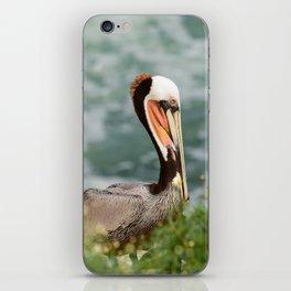 California Brown Pelican iPhone Skin