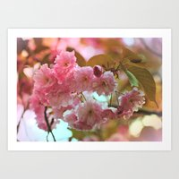 cherry blossoms Art Prints featuring Cherry Blossoms by Judy Palkimas