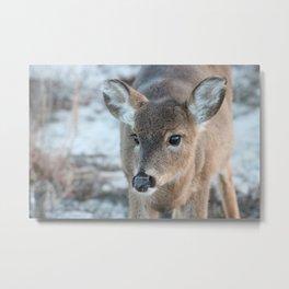 Deer At Fire Island Metal Print