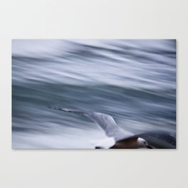 Drifting with the wind... Canvas Print