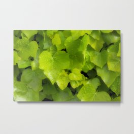 Green leaves with dew Metal Print