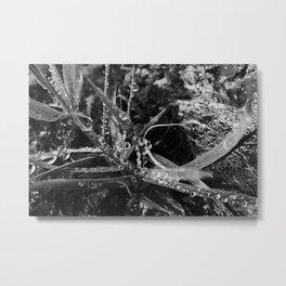 Exmoor XI Metal Print