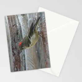 Ruby-Crowned Kinglet At The Fountain Stationery Cards