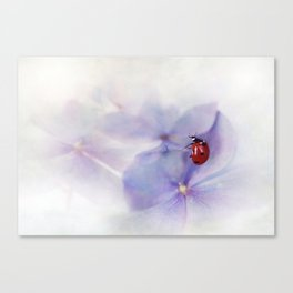 Ldybird on purple hydrangea Canvas Print