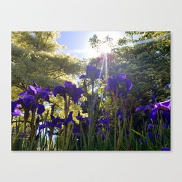 Iris Light Canvas Print