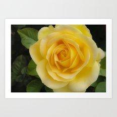 Angelic Rose Art Print