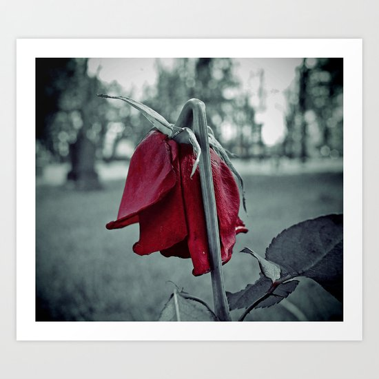 Weeping rose Art Print