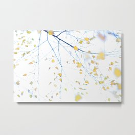 Abstract leaves and branches of a birch tree  Metal Print