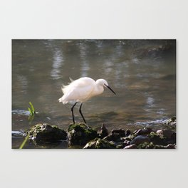 white heron bird by the river Canvas Print