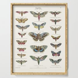 Vintage Moth Chart Serving Tray