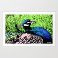 peacock Art Prints featuring Peacock by BeachStudio