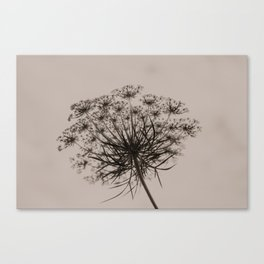 Queen Ann's Lace Canvas Print