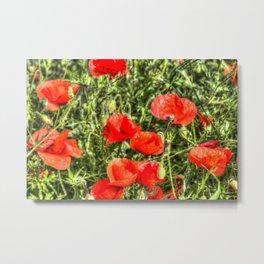 Poppys Of Summer Metal Print