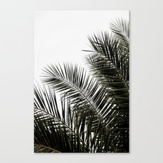 Palm Leaves 3 Canvas Print