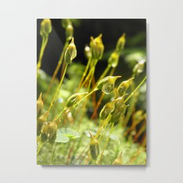 forest cover /Agat/ Metal Print