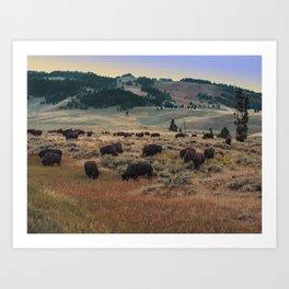 Bison in Paradise Art Print