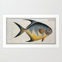 Vintage Illustration of an AngelFish (1785) Art Print