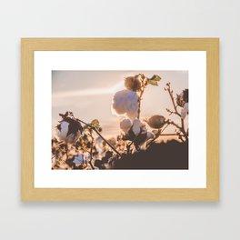 Cotton Field 15 Framed Art Print