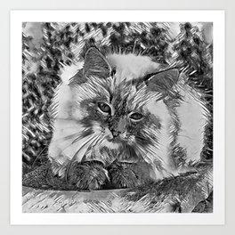 AnimalArtBW_Cat_20170907_by_JAMColorsSpecial Art Print