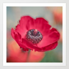 Red Poppy Art Print