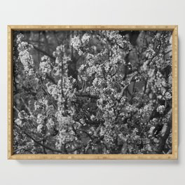 Black And White Pear Tree Blooming Serving Tray