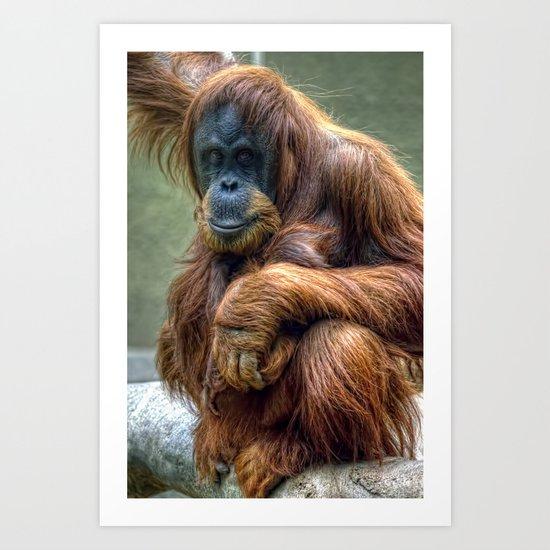 Sumartran Orangutan  Art Print