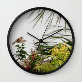 Flying Sparrow Bird female caught in motion flying Wall Clock