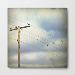 After the Rain - birds in flight photography Metal Print