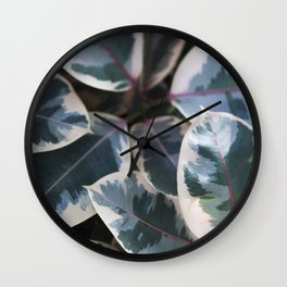 Ficus elastica 'Ruby'  //  Rubber-Plant  // The Botanical Series Wall Clock