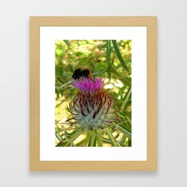 A bee and its donkey thorn Framed Art Print