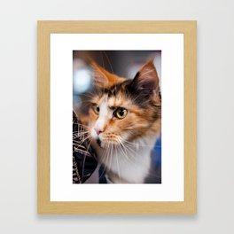 Red hair cat head portrait Framed Art Print