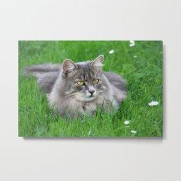 Persian cat in the grass Metal Print
