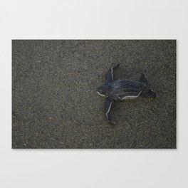 Leatherback Turtle Baby Canvas Print