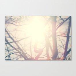 Sun light through tree branches-Santa Fe, NM Canvas Print