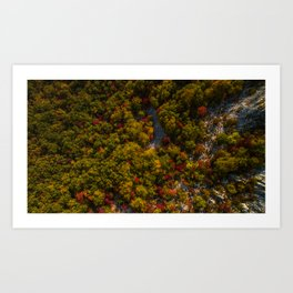 Aerial drone view of amazing autumn colors in fall forest. Art Print
