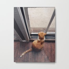 cat gazing Metal Print