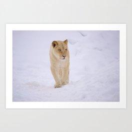 Lion In Winter Art Print